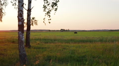 Russian landscape, birch on the sunset, tractor plowing field Stock Footage
