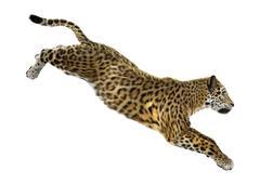 Big Cat Jaguar - stock illustration