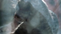 Cat and mouse  slow motion Stock Footage