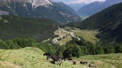 Herd of donkeys on pasture. Stock Footage