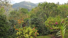 A colorful garden in the tropics Stock Footage