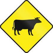 Cattle Crossing In Ireland - stock illustration