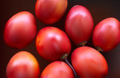 New Zealand evergreen tree fruit vegetable, Tamarillo - stock illustration