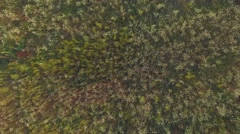 Aerial: Chamomile field zoom out 4k UHD TV Stock Footage