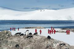 Group of people looking at a small colony of Gentoo Penguins Stock Photos