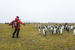 People watching a small colony of King Penguins on South Georgia. Stock Photos
