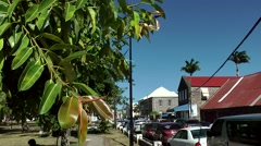 St. Kitts 057 Basseterre downtown main street with a gum tree in foreground Stock Footage