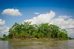 Tropical Rainforest  at Amazonas, South America Stock Photos