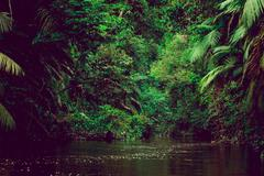 River deep in jungle forest. Amazonas composition Stock Photos