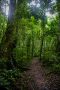 Subtropical forest - stock photo