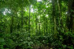 Tropical Rainforest Landscape, Amazon - stock photo