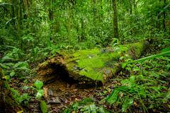 Tropical Rainforest Landscape, Amazon Stock Photos
