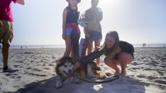 Friends play with dog on beach Stock Footage