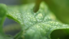 Micro shot of Leafs Stock Footage