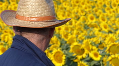 Senior farmer looking at his sunflower field. Stock Footage