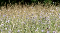 Flower Meadow, Farthing Downs Stock Footage
