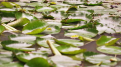Close up of leaves resting on still pool Stock Footage