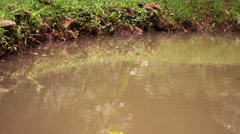 Rippling water and bank of a river or pond Stock Footage