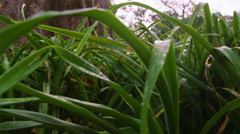 Inclining side track of grass near tree Stock Footage