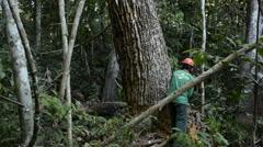 Deforestation in the Amazon rainforest Stock Footage
