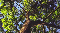 Low angle shot of thorny trunk and branches Stock Footage