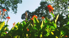 Tracking footage of tall flowers and trees Stock Footage