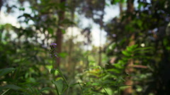 Stock Video Footage of Weeds and out-of-focus forest