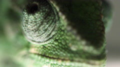Extreme close up of a chameleon's eyes moving independently Stock Footage