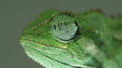Chameleon profile close up Stock Footage