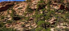 Steep  cliff and  conifers Stock Photos