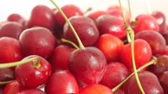 Fresh tasty organic cherry fruit background 4K 2160p UltraHD video - Slow til Stock Footage