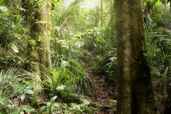 Stock Photo of Lush green foliage in tropical jungle