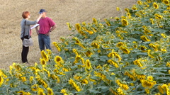 Woman interviewing a man on sunflower field. - stock footage