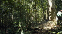 Deforestation in the Amazon rainforest - stock footage