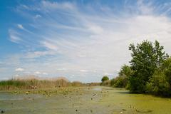 River on background reed and sky. - stock photo
