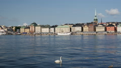 Swan with young one and Gamla stan old town in the background Stockholm Sweden Stock Footage