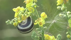 Little snail shell was attached to the flower, the green leaves in forest Stock Footage