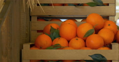 Orange in wooden box Stock Footage