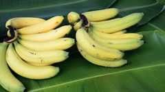 Bunch of bananas fruit on leaves. Stock Footage