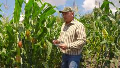 Stock Video Footage of Agronomist inspects corn field.