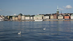 Two swans with Gamla stan old town in the background Stockholm Sweden Stock Footage