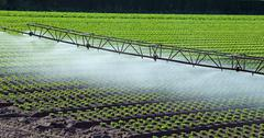 automatic irrigation system in the field of green lettuce - stock photo