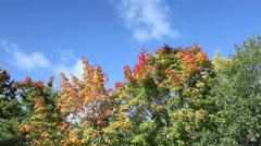 Clouds in the blue sky over bright autumn trees Stock Footage
