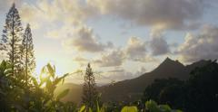 Sun rising through jungle canopy on Pali Mountain Range, Oahu, Hawaii - stock footage