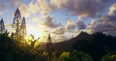 Sun rising through jungle canopy on Pali Mountain Range, Oahu, Hawaii Stock Footage