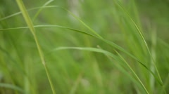Green grass in summer wind Stock Footage