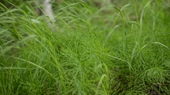 Vibrant green arctic fern and green grass in summer breeze Stock Footage
