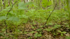 Stock Video Footage of wandering in lush green forest foliage with brown leaf on forest floor