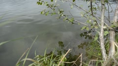 river shore silent waves and reflective surface in summer - stock footage