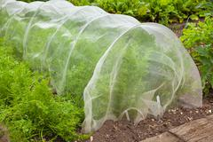 Carrots under cover to stop pests Stock Photos